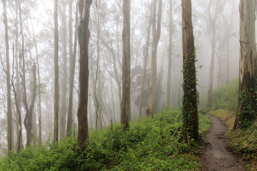 hiking at mount sutro, one of several popular kids activities near richmond district of san francisco